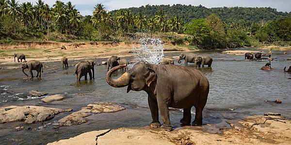 Elephants lac Minneriya