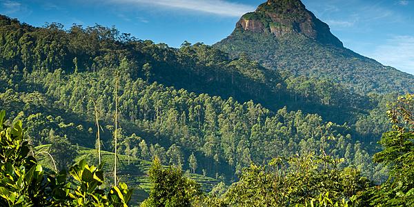 Adam's pic Sri Lanka