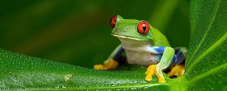 Weelderige natuur in het Hart van Colombia