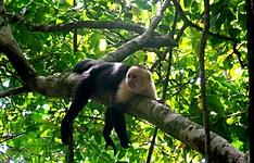 Au coeur de la nature: Tortuguero, Monteverde, Manuel Antonio et Corcovado