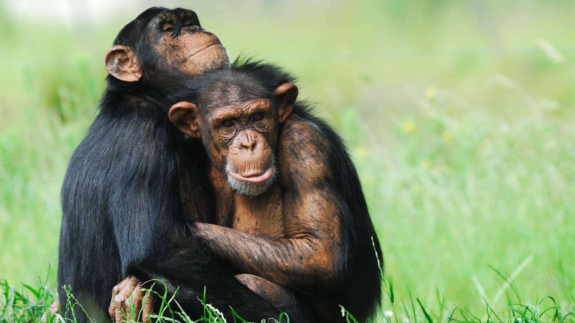 Chimpancés, Gorilas y Etnias - Safari Muzuli