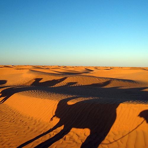 Sur la piste des nomades -