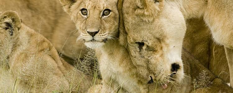 Lo mejor de Tanzania: Safari Sharubu