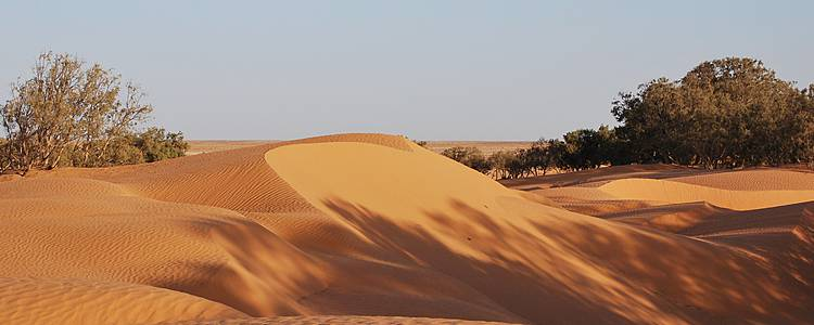 Merveilles du Sud, de Djerba à Tozeur