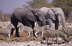 Safari et bivouac en famille