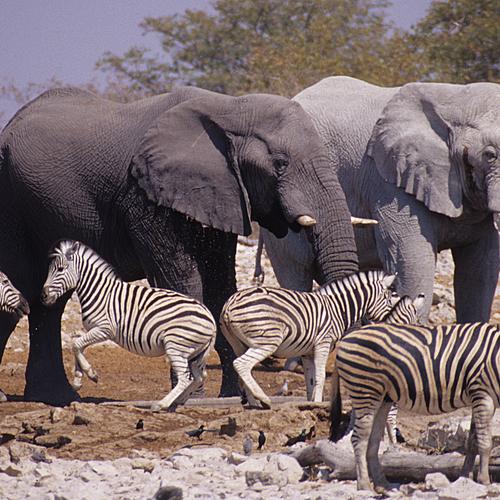 Safari et bivouac en famille - Windhoek -