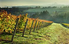 L\'Oregon, à travers les vignobles et les cascades