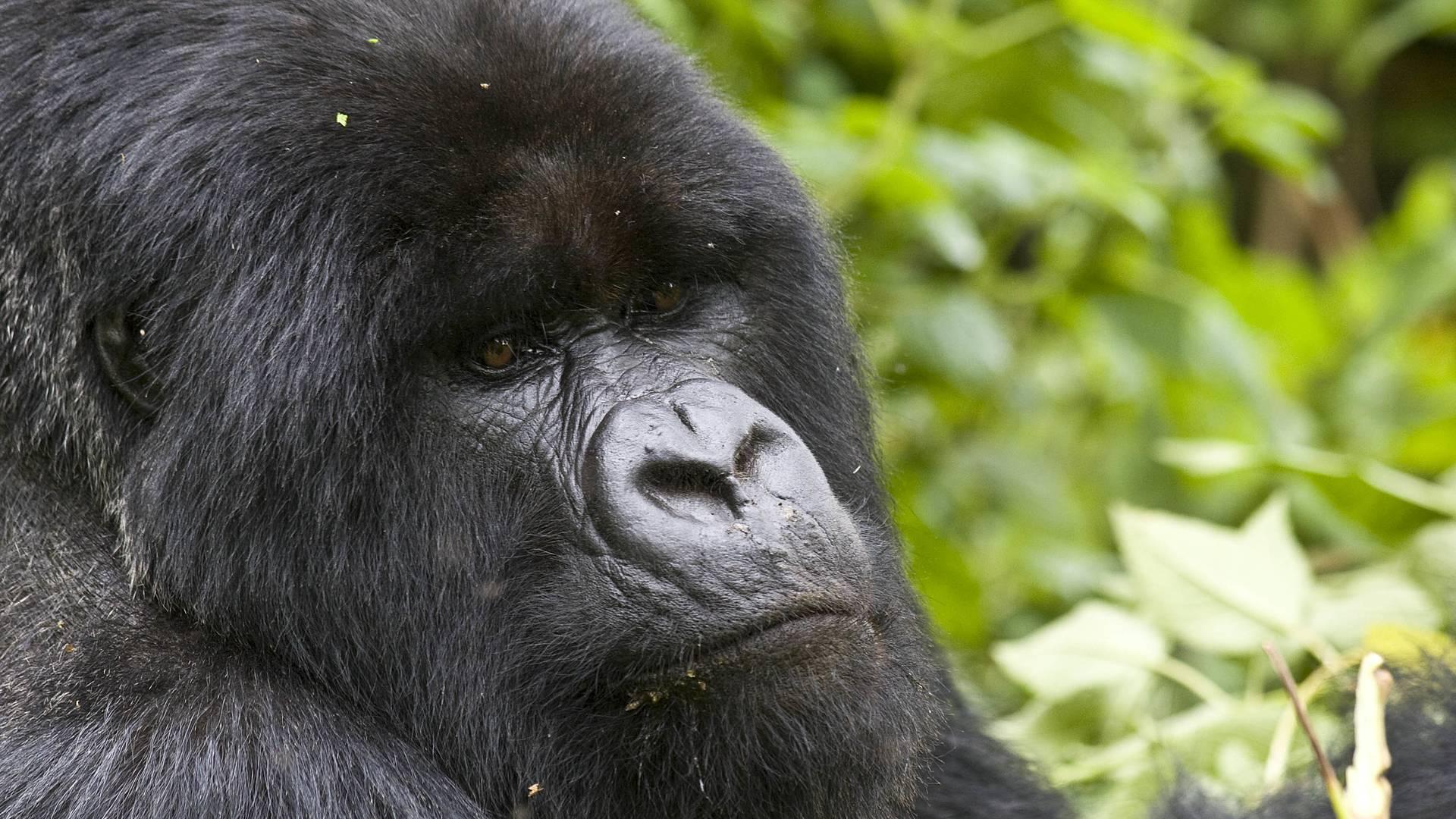 Découverte Tanzanie - Rwanda