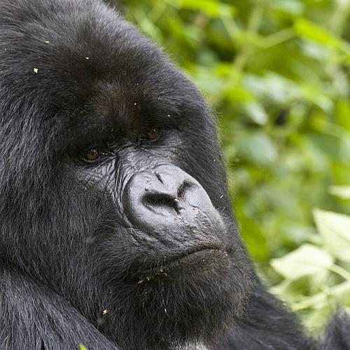 Découverte Tanzanie - Rwanda -