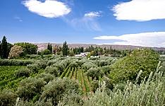 Séjour de charme entre vignobles mythiques et routes andines