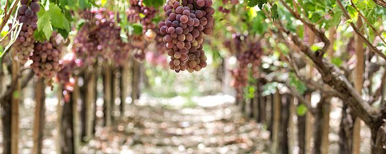 Di cantina in cantina alla scoperta dei vini siciliani