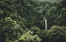 Jungles et forêts en petit groupe