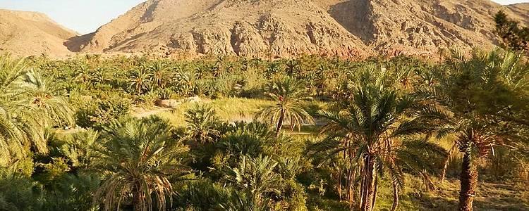 Entre déserts et oasis