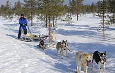 Semaine d\'aventure pour un Nouvel-an en Laponie