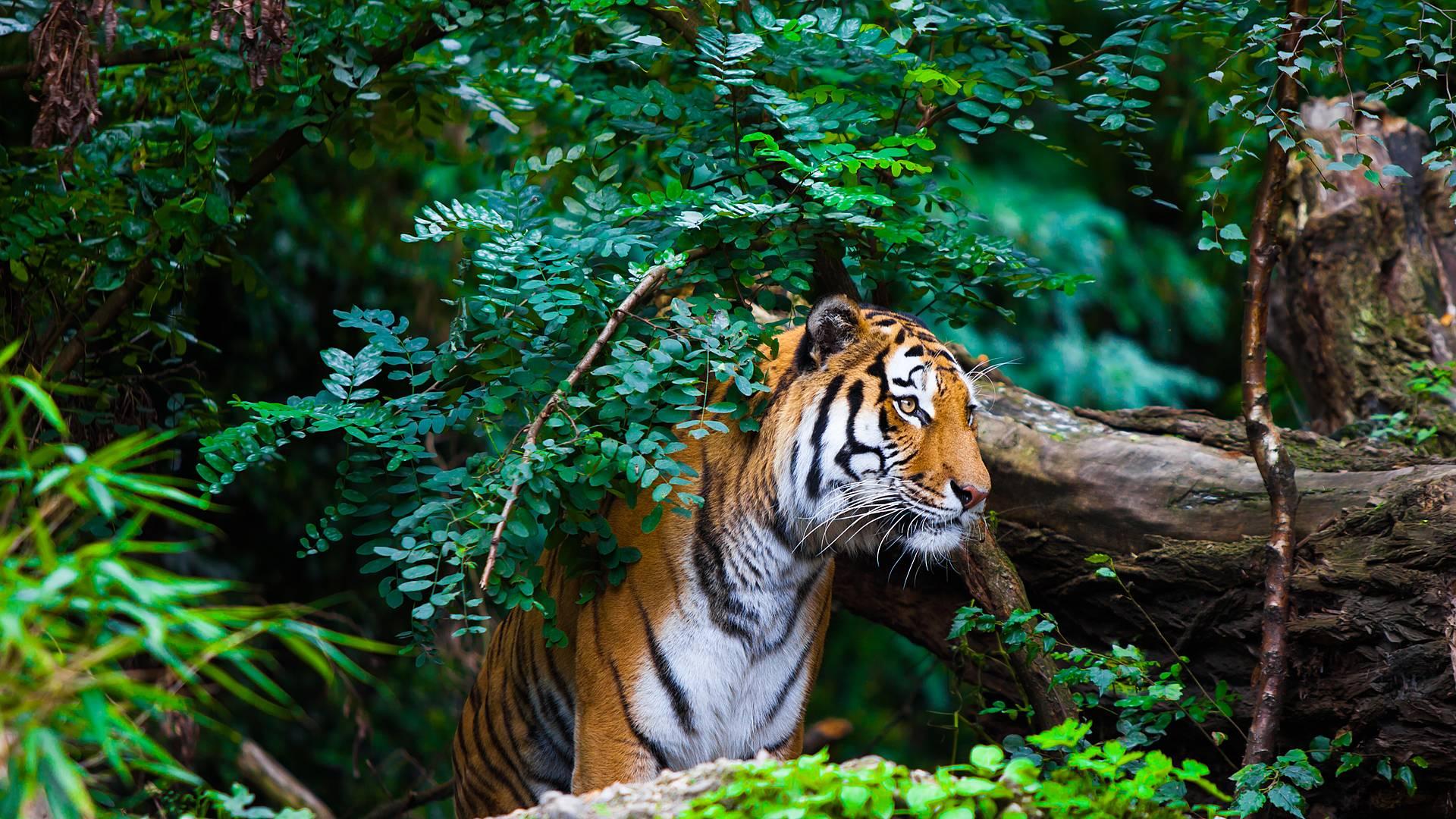 Auf den Spuren des Dschungelbuchs