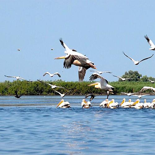 Bucarest et le Delta du Danube : paradis des oiseaux -