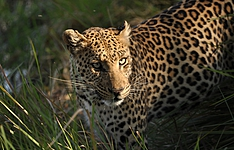 Botswana et Namibie, grandeur nature