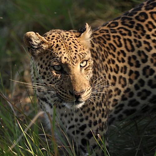 Botswana et Namibie, grandeur nature - Windhoek -