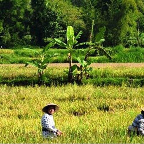 L'île des Dieux entre mer, rizières , forêt tropicale et volcans-Départ en groupe -