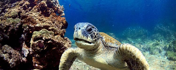 Combinatiereis met Ecuador en Galapagos Cruise