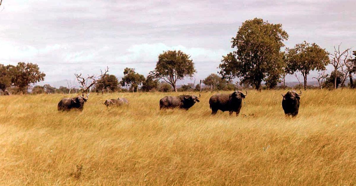 Voyage avec des animaux : Duo Safari sud Tanzanie et détente à Zanzibar