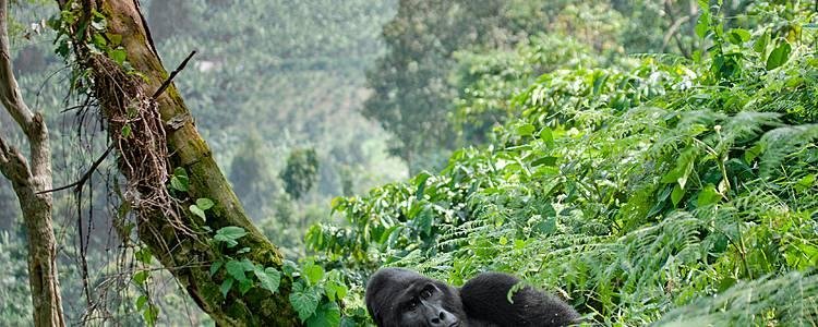 Primaten-Tour durch Ostafrika