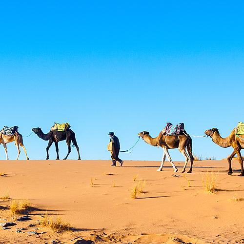 Caravane chamelière, de dunes en oasis - Marrakech -