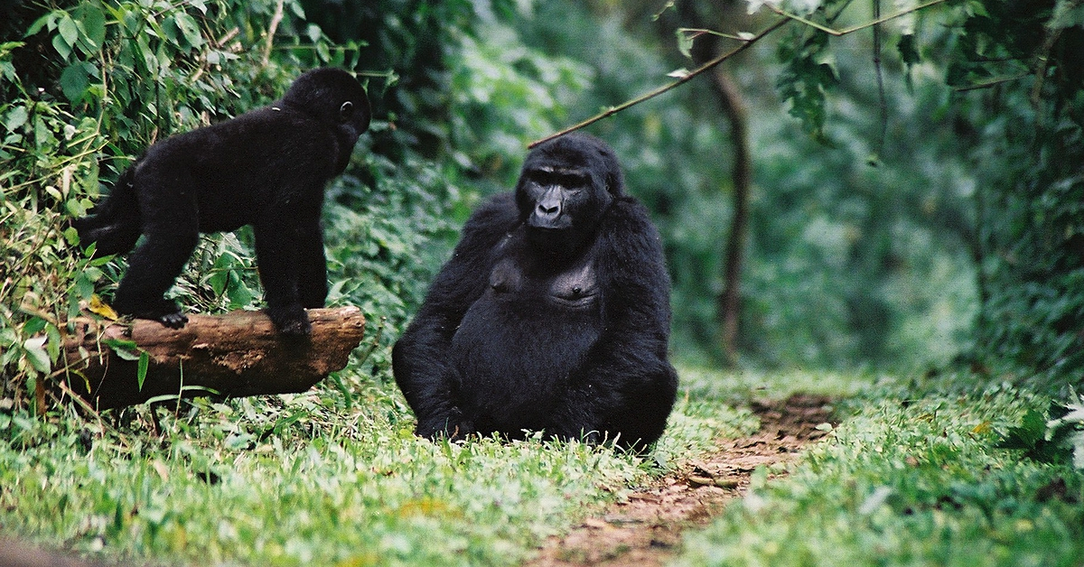Voyage avec des animaux : Primates et safaris