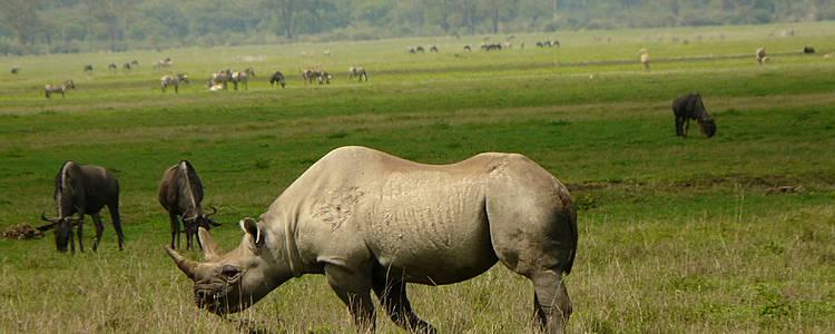 Norte de Tanzania: ¡9 días de safari!