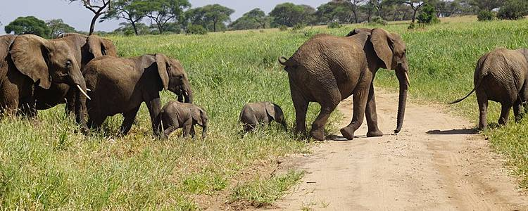 Aventura en safari por el Norte de Tanzania