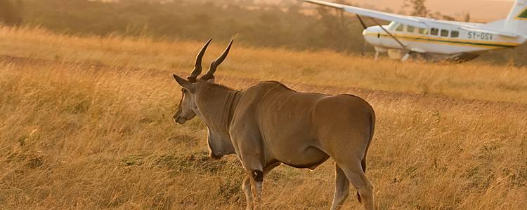 Flugsafari und Luxus-Camps