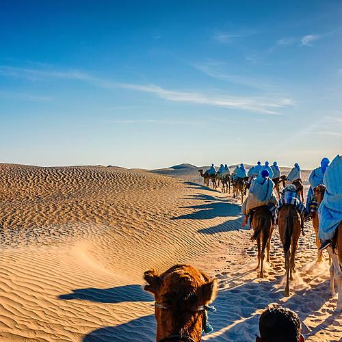 Randonnée chamelière - Djerba -