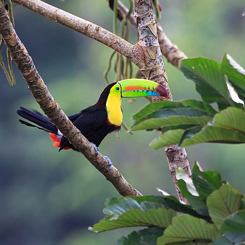Odyssée au coeur de la jungle - San José -