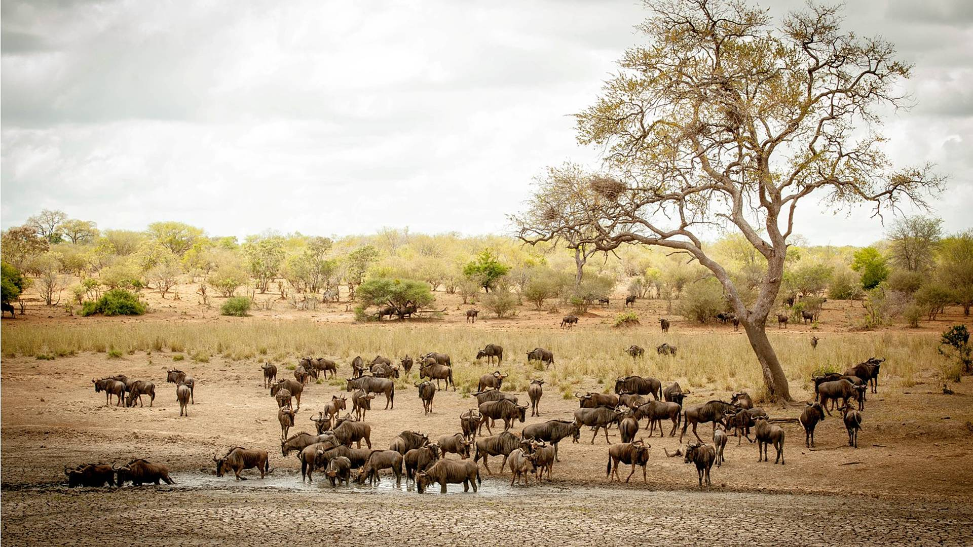 Wilde Tiere und bezaubernde Landschaften