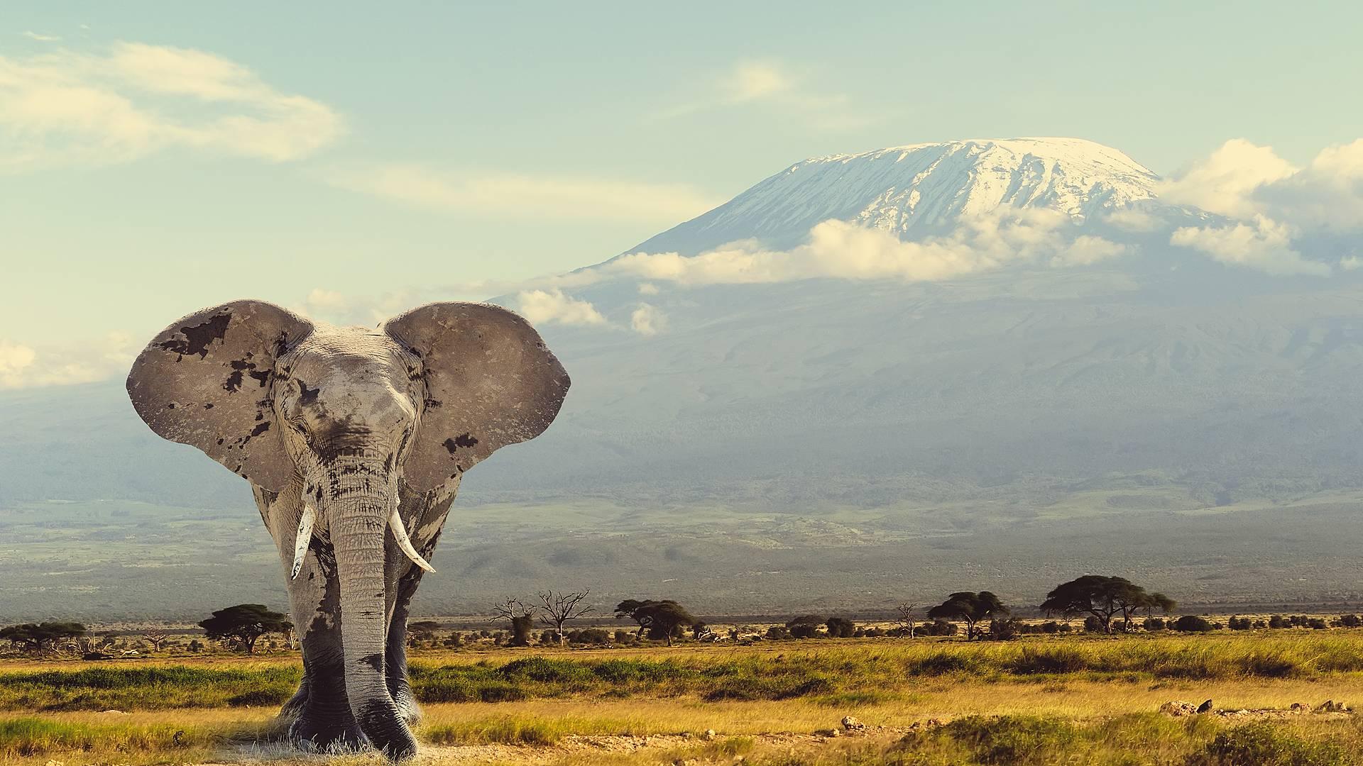 Familiensafari und Sansibar