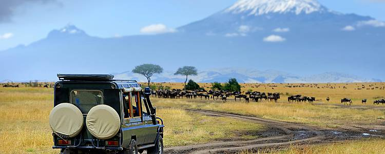 Safari von Norden nach Süden