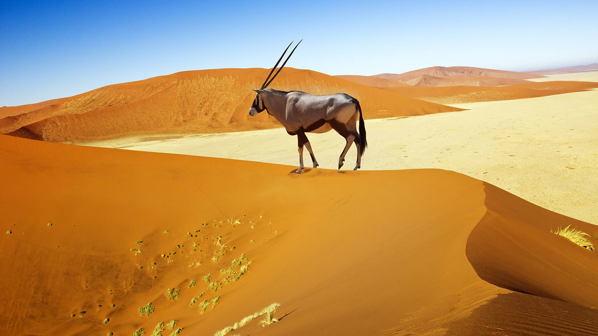 Afrikas Natur und Kultur im Spiegel der Zeit