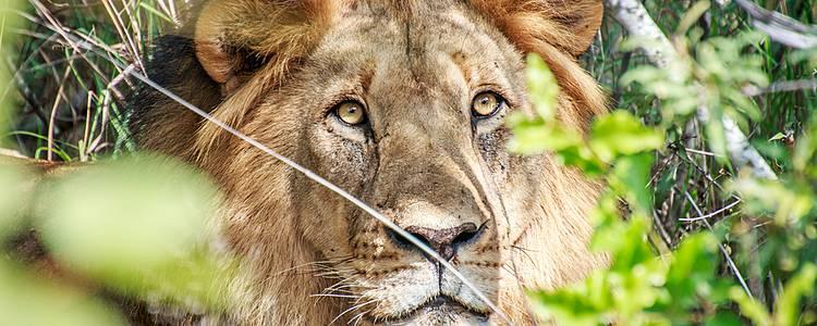 Wildlife und Natur vom Kruger Nationalpark bis nach Kapstadt