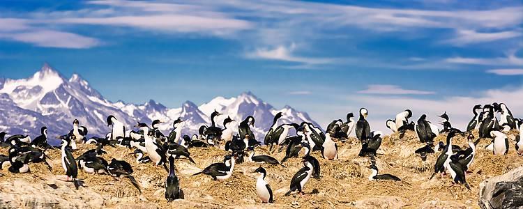 Glaciares, fauna y bosques patagónicos