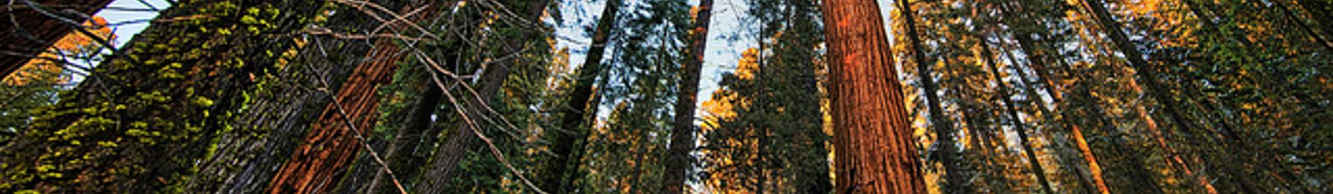 Sequoia area