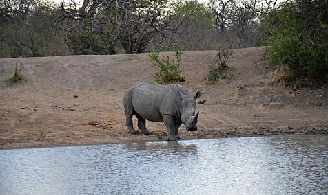Voyage Afrique Du Sud L 39 Avis De Fanfan 14 Jours En