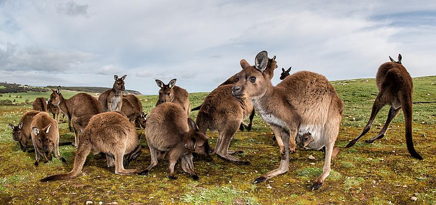 Véritables sites de rencontres australiens