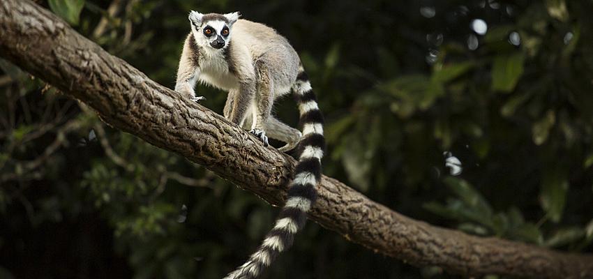 siti di incontri Madagascar script damore per incontri gratis