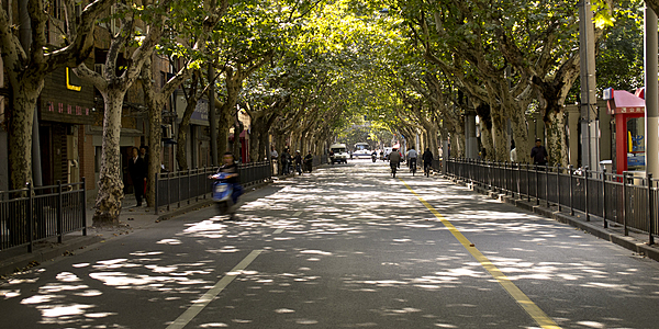 Una calle arbolada de la Concesión Francesa @flickr cc Andrew K. Smith