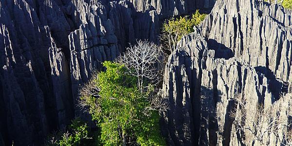 Los Tsingys de Bemaraha @Hoffmann Simon