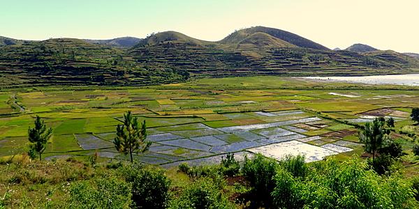 Arrozales en las afueras de Antsirabe @Hoffmann Simon