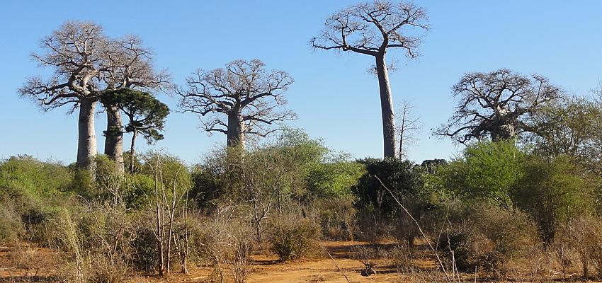 Paysage du sud de Madagascar @Hoffmann Simon