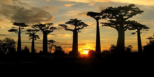 Puesta de sol sobre el Paseo de los Baobabs @Hoffmann Simon