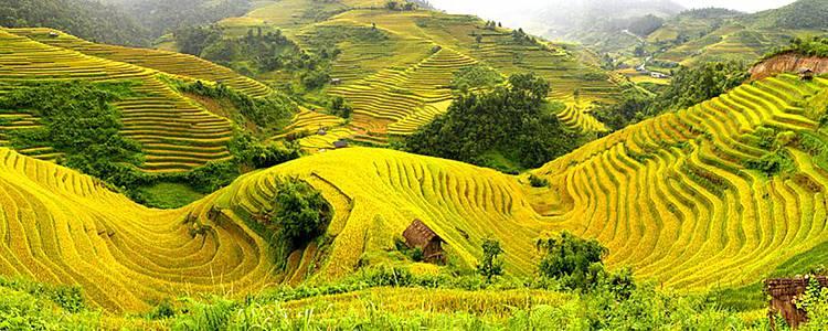 Stagione d'oro Mu Cang Chai (fine agosto e settembre)