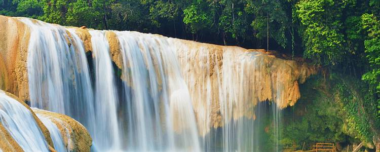 Cultura maya, selva en Chiapas y Holbox